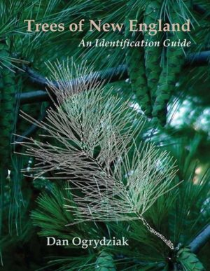 Trees of New England: An Identification Guide