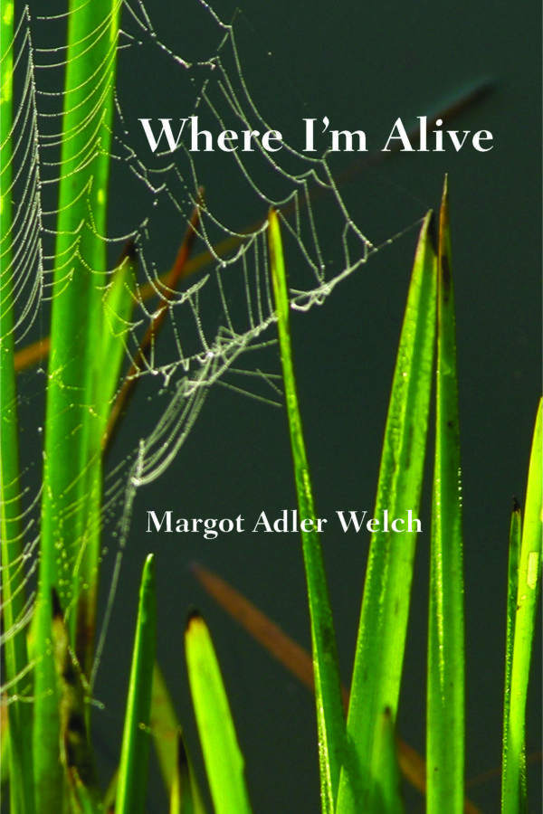 front cover, spider web in tall grass
